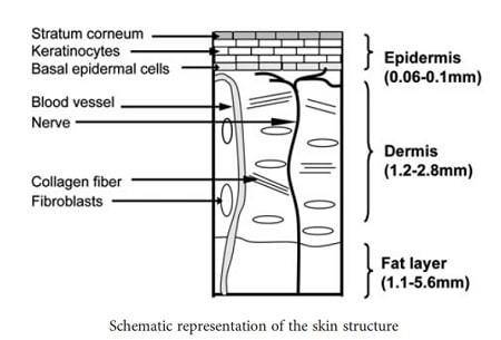 Skin-structure